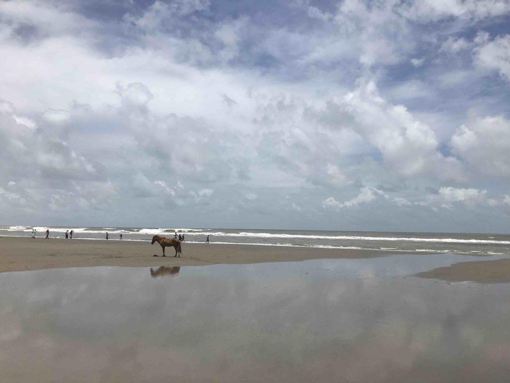 cavallo-spiaggia-riflesso