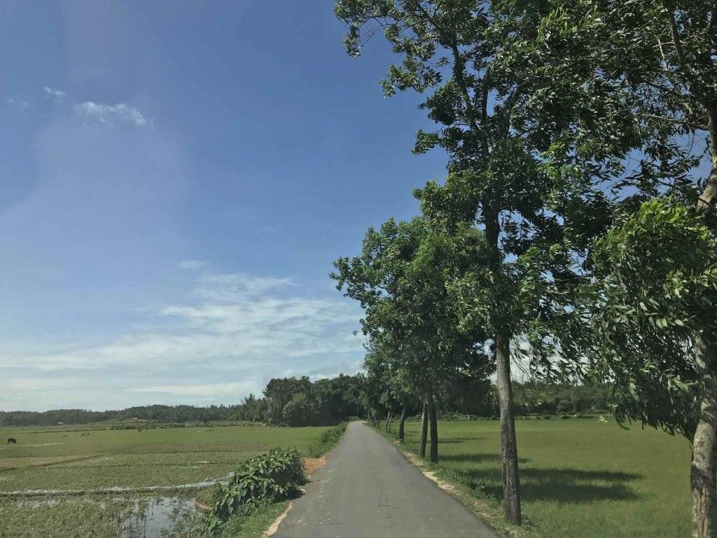 strada-alberi-teknaf