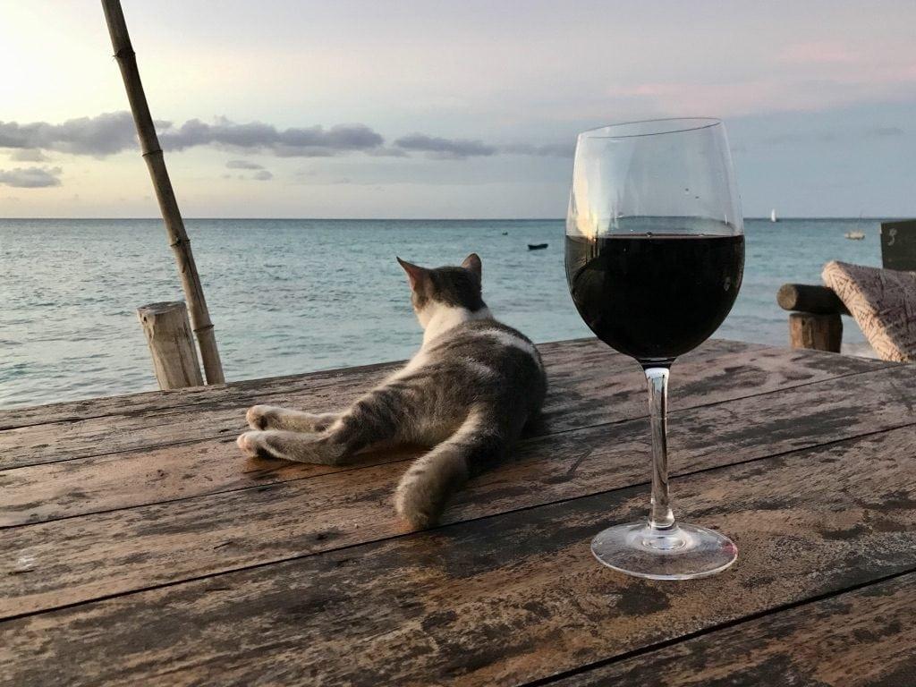 Un gatto e un calice di vino sul tavolo con il mare di Zanzibar sullo sfondo