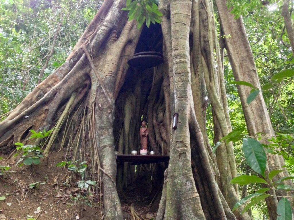 Un Buddha in una nicchia create in un albero nel Parco Nazionale di Kep