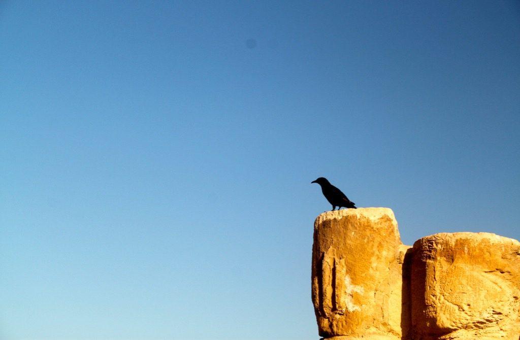Un uccello su una rovina di Masada