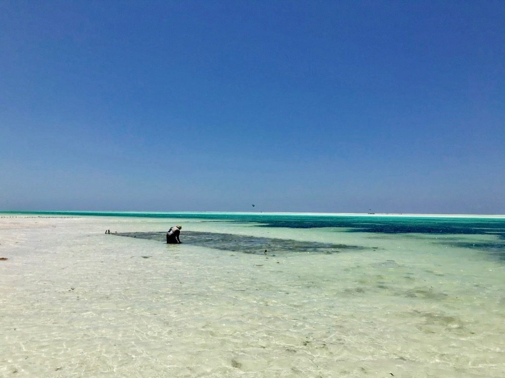 Donna che raccoglie alghe sulla spiaggia di Paje