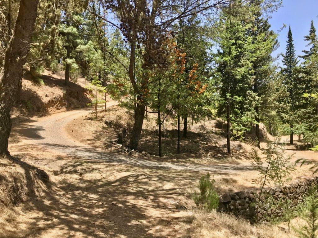 Curva di un sentiero in un bosco