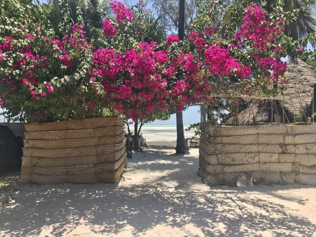 Fiori che delimitano l'ingresso del Kimte Lodge