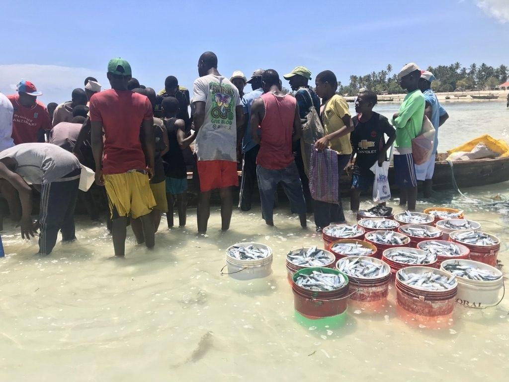 Pescatori che vendono i pesci appena pescati dalle barche sulla spiaggia a Nungwi