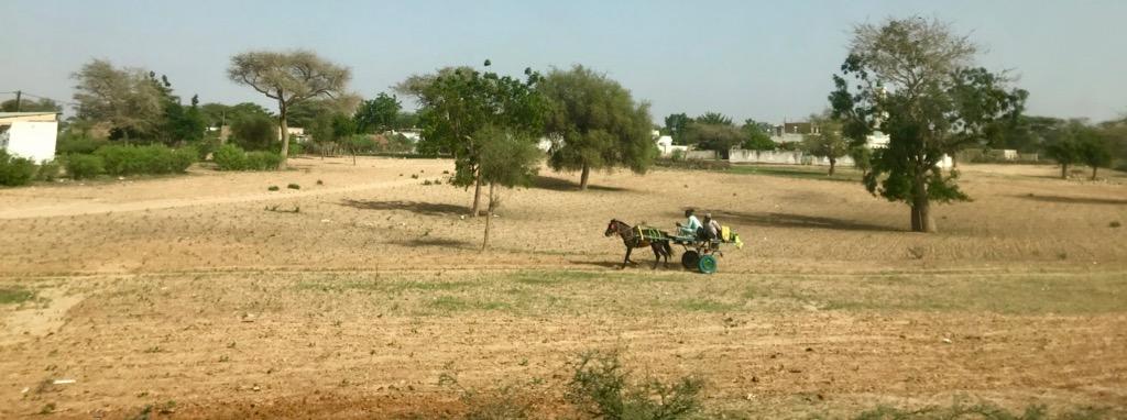 Un carretto tra i campi a lato della strada tra Dakar e Saint-Louis