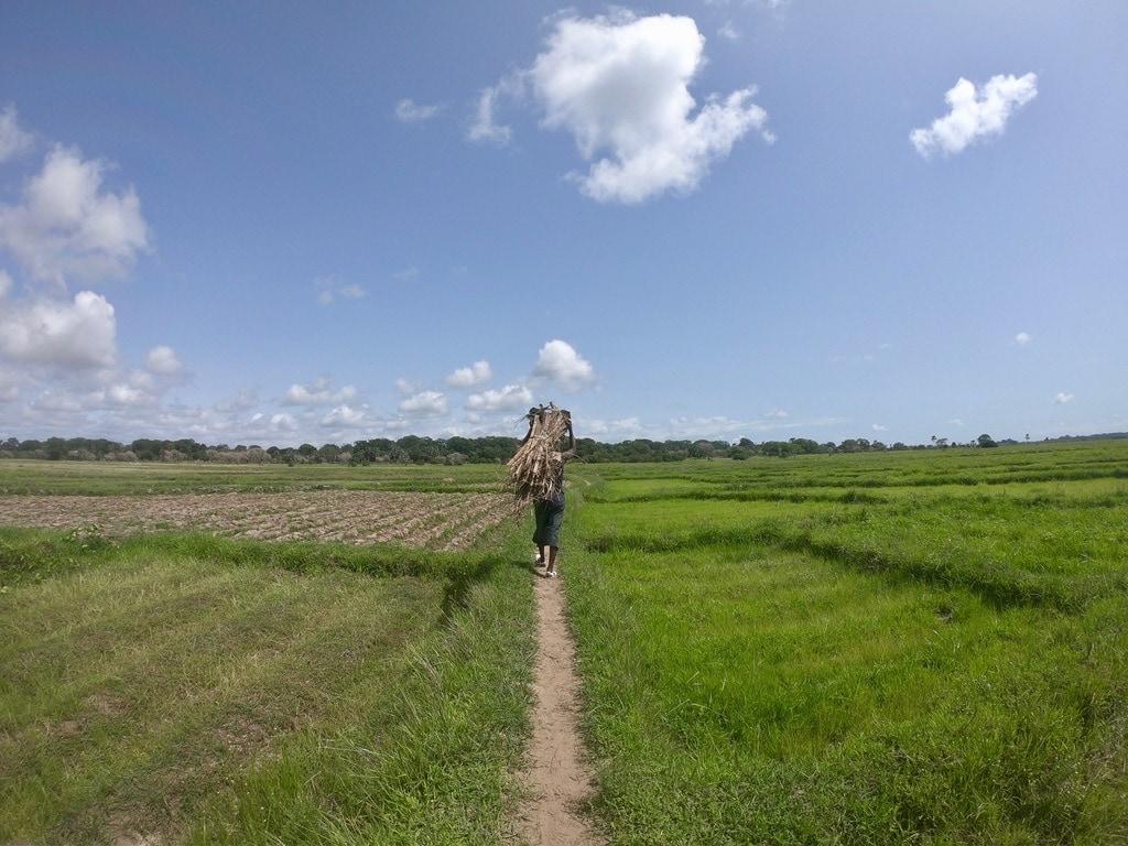 Un uomo trasporta una fascina nella palude vicino a Mlomp