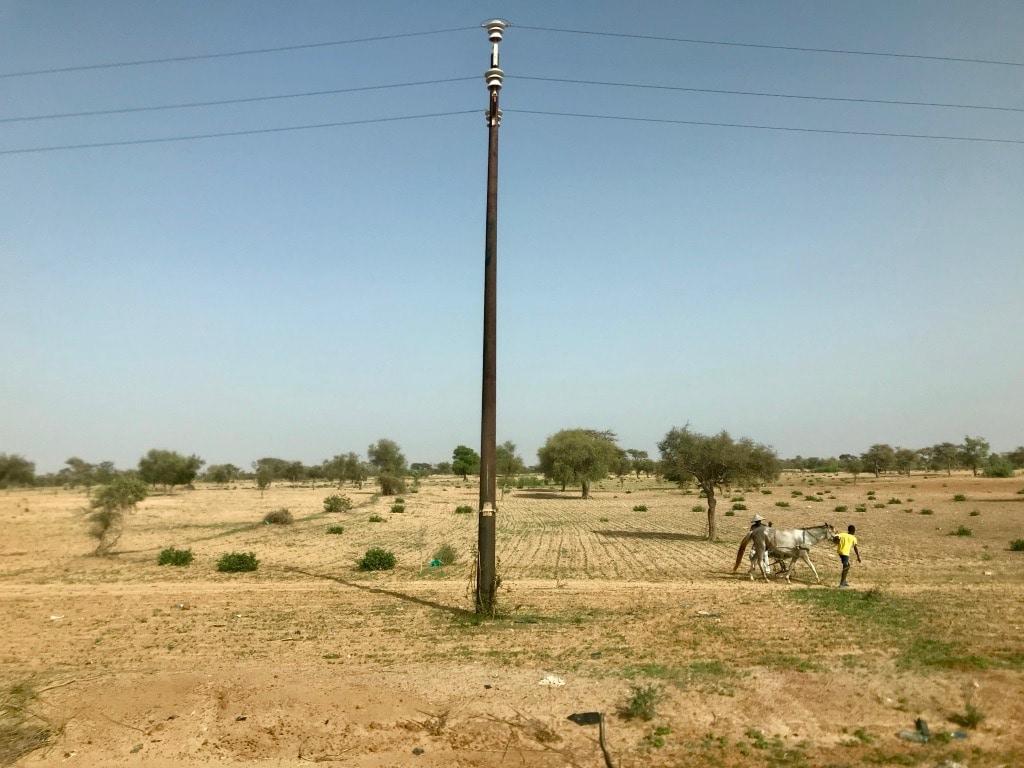 Un mulo di fianco alla strada in Senegal