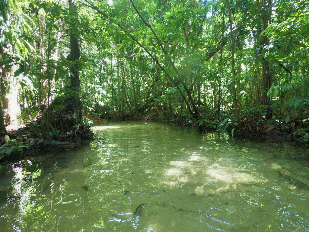 Un ruscello dalle acque verdi nella FLONA