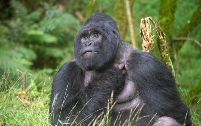 Uganda: cosa vedere assolutamente