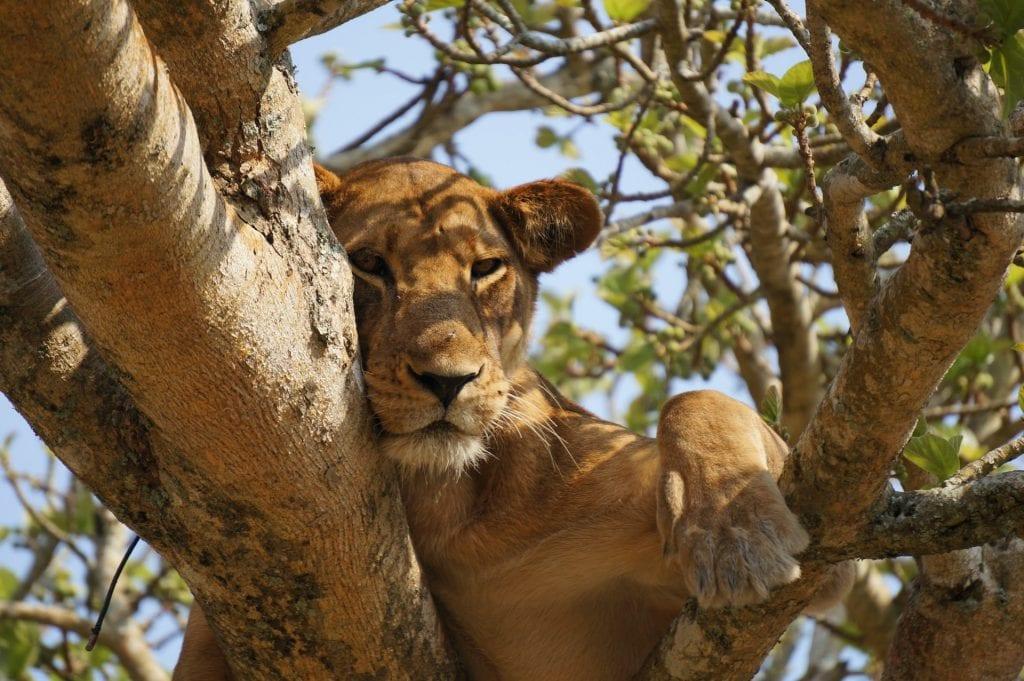queen elizabeth park uganda