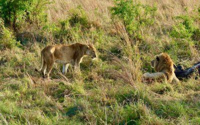 I migliori safari al Kidepo Valley National Park