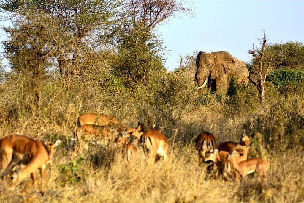 safari tanzania tarangire national park