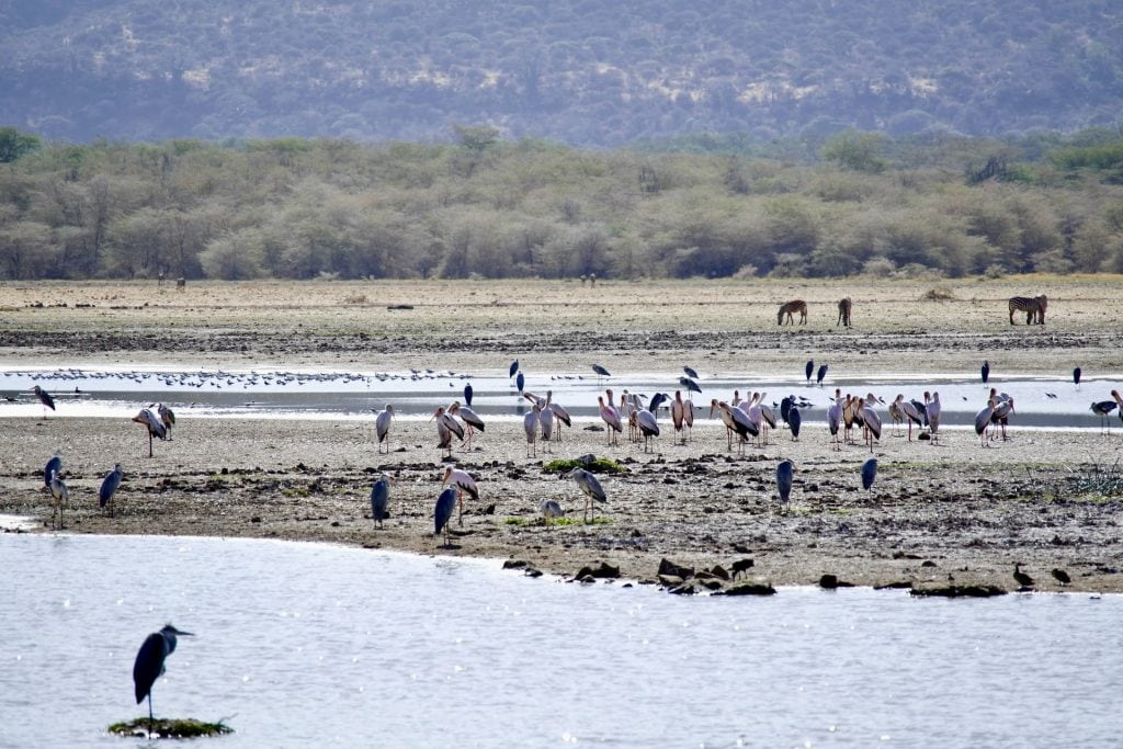safari lake manyara tanzania