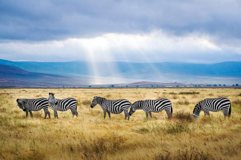 ngorongoro tanzania viaggio fai da te