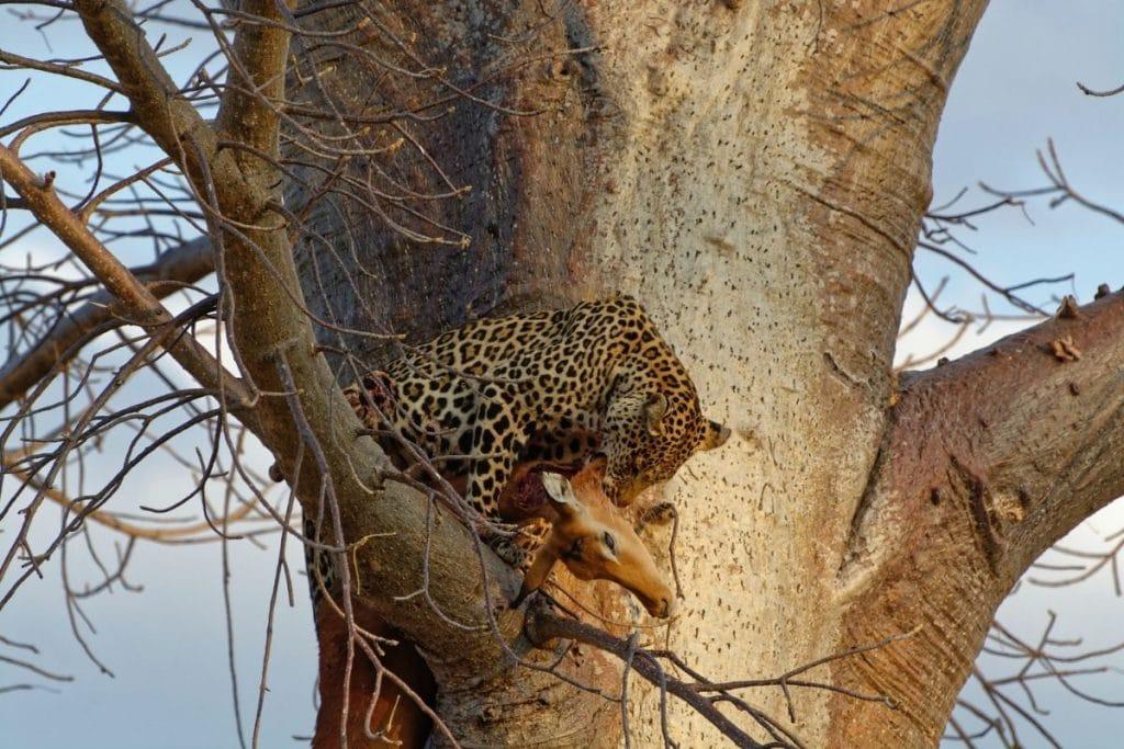 tanzania safari itinerari ruaha national park