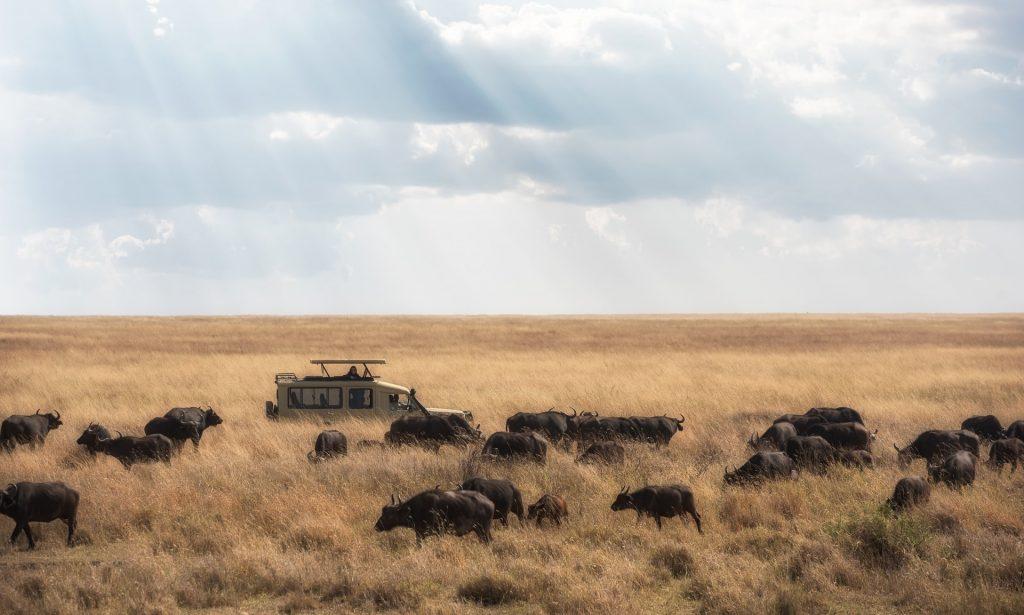 serengeti tanzania safari