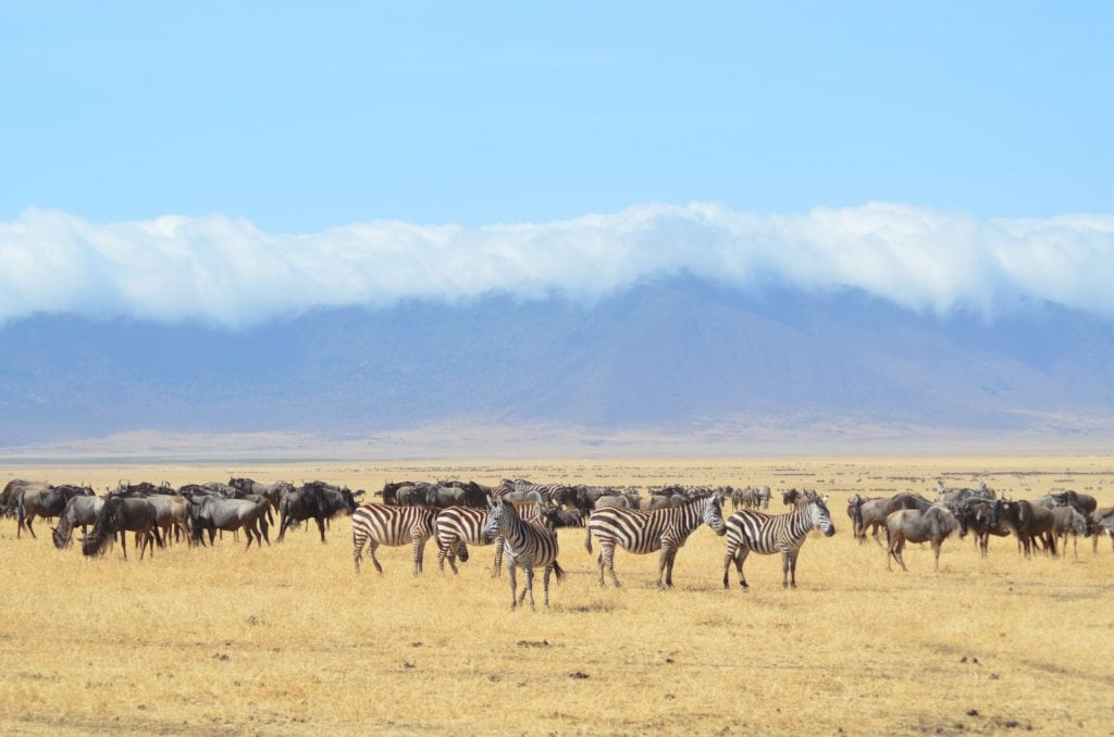 parco nazionale serengeti
